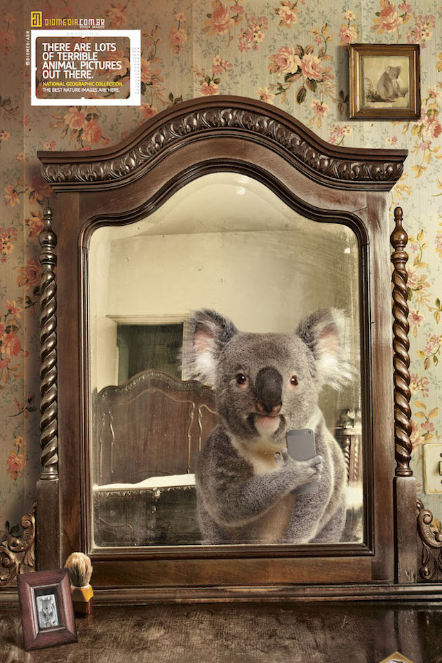 Selfie_National_Geographic-koala
