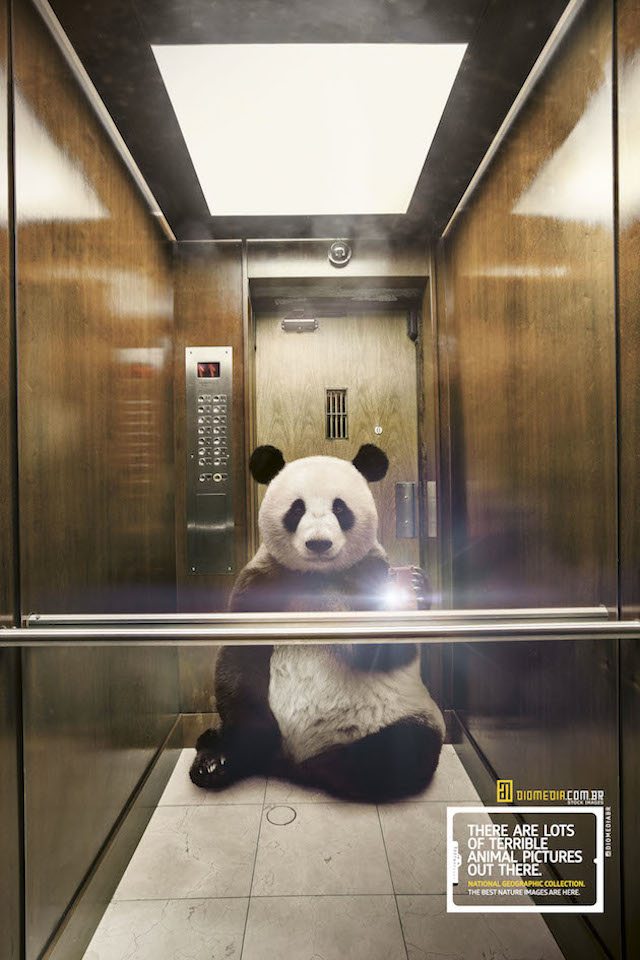 Selfie_National_Geographic-panda