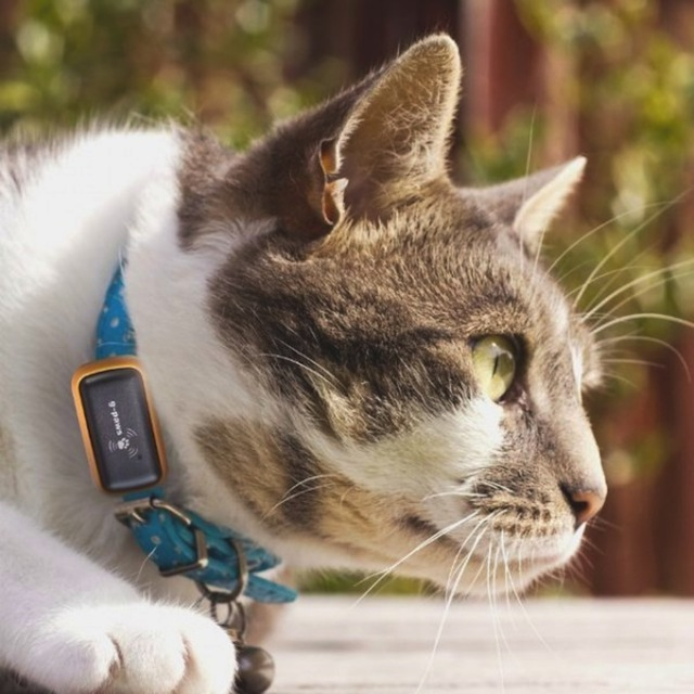 collier-gps-chat