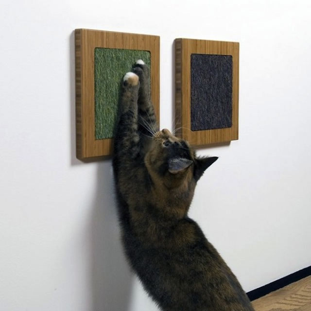 grattoir-mur-chat