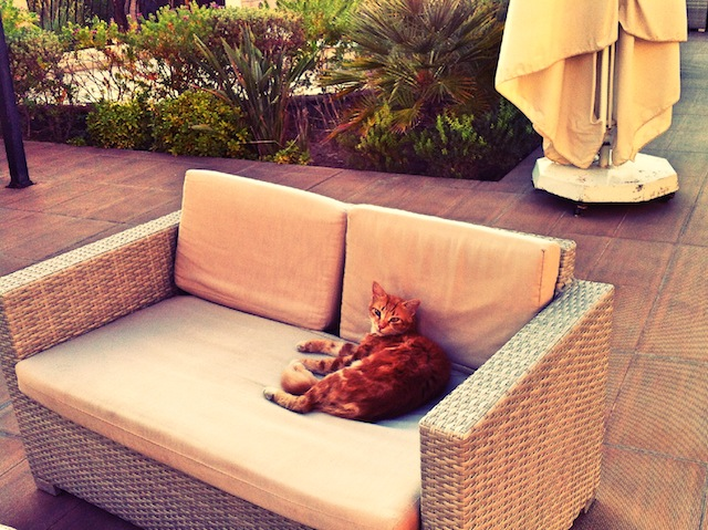 chat hotel paphos