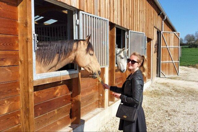 chevaux domaine de la chapinière