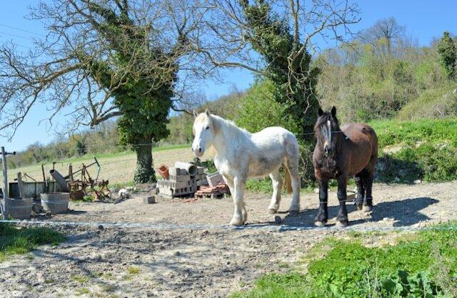 chevaux domaine de noiré