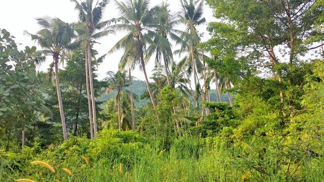 itineraire-koh-samui-thailande-10